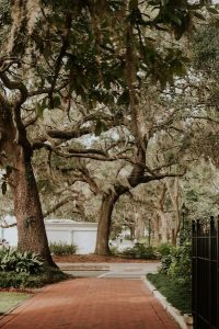 there are plenty of live oaks to see on your trip to savannah, ga