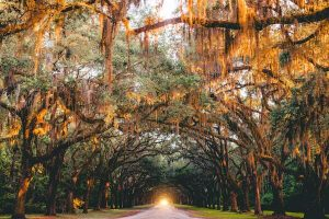 sunrise at the wormsloe historic site, a beautiful place to be on your trip to savannah ga