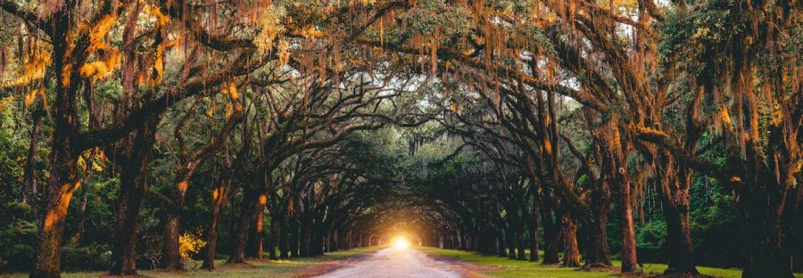 try to get a sunrise walk of the wormsloe historic site when you plan your trip to savannah ga